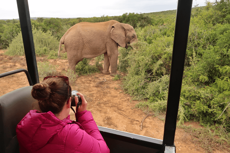 Safari in Addo Elephant National Park