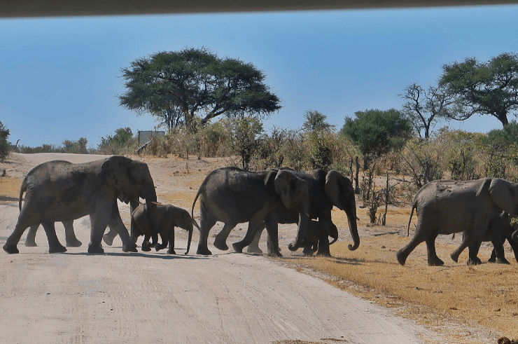 Khwai Concession & Moremi Game Reserve Botswana - Rock My Adventure Tours