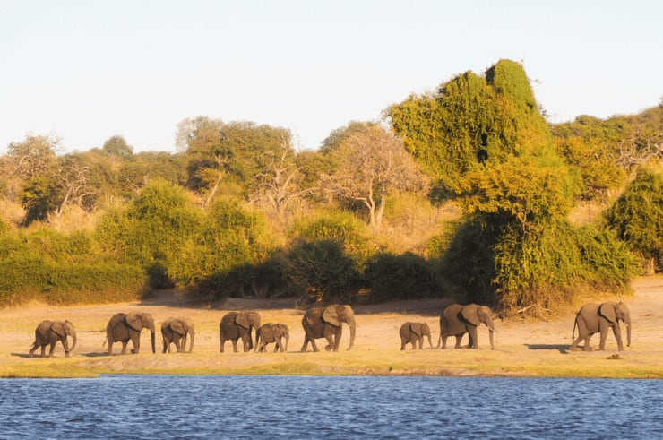 Chobe Riverfront Botswana - Rock My Adventure Tours