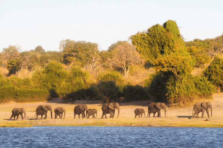 Chobe Riverfront Botswana - Rock My Adventure Tours