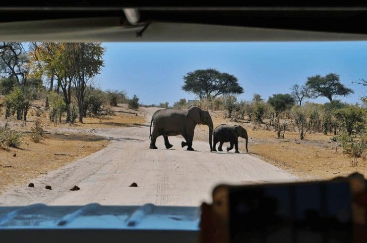 Khwai Concession & Moremi Game Reserve Botswana - Rock My Adventure Tours