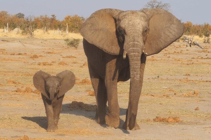 Savuti Botswana - Rock My Adventure Tours