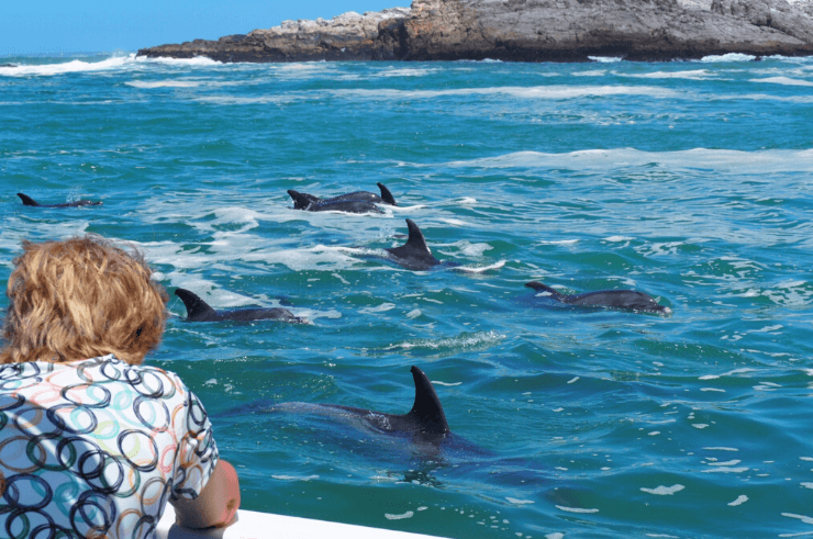 Dolphin Watching Boat Trip in Port Elizabeth