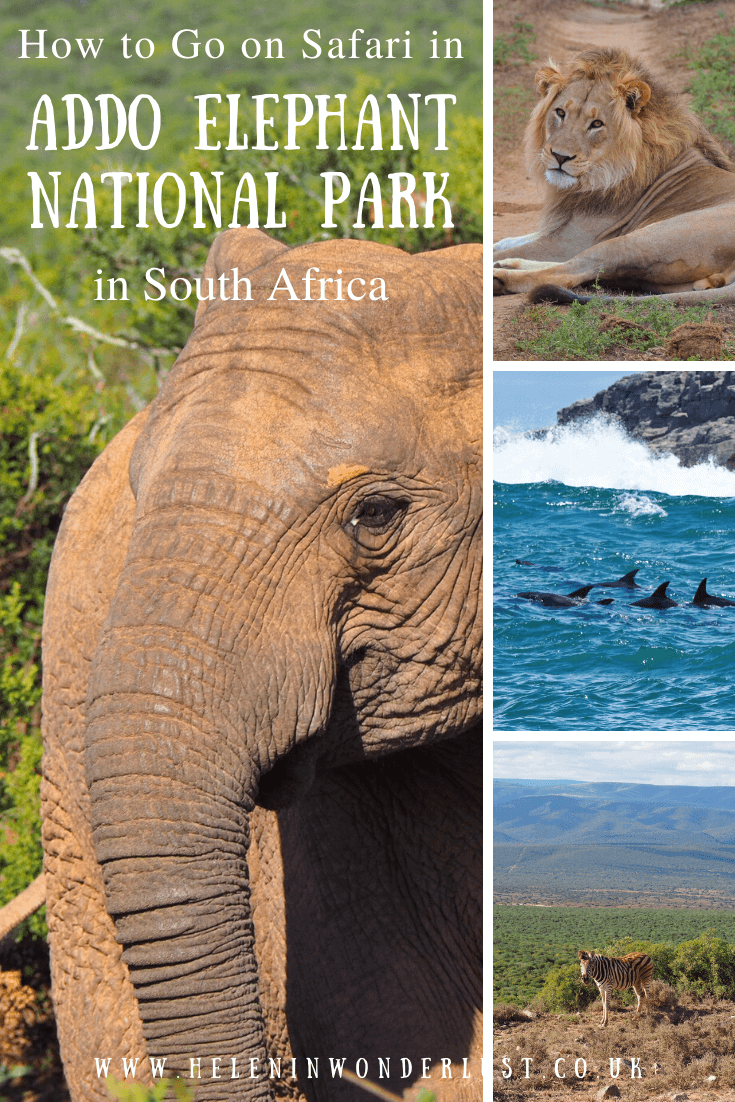 Here's my Handy Guide to Going on Safari in Addo Elephant Park in South Africa