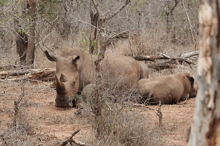 Hlane National Park, eSwatini