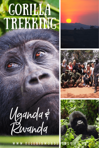 The Complete Guide to Gorilla Trekking in Uganda & Rwanda - Including How To Obtain Permits, Where to Stay and How to Get There
