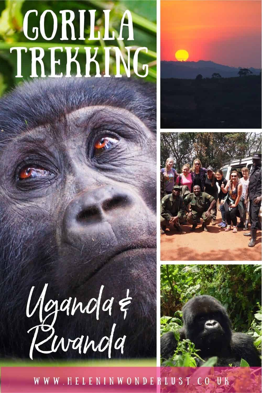Gorilla Trekking in Uganda & Rwanda - Everything You Need to Know