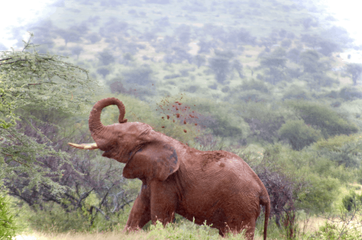 Reteti Elephant Sanctuary, Northern Kenya