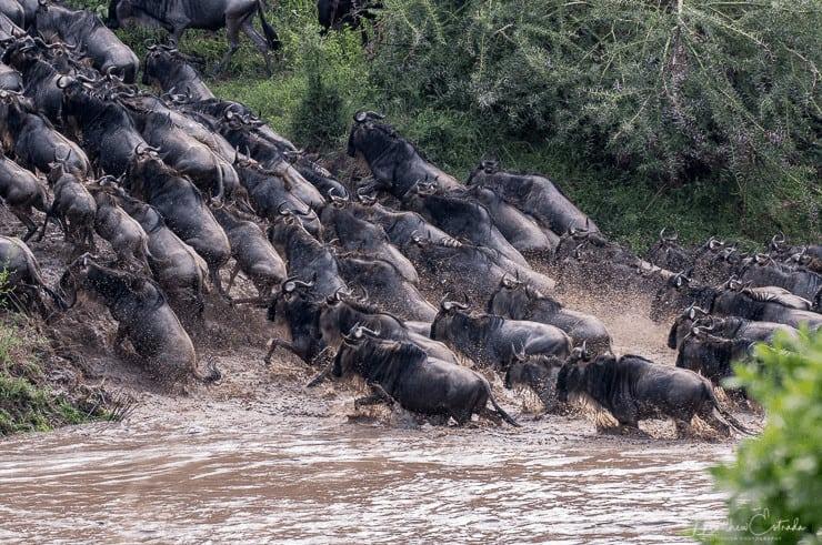 Wildebeest Migration - Kenya & Tanzania