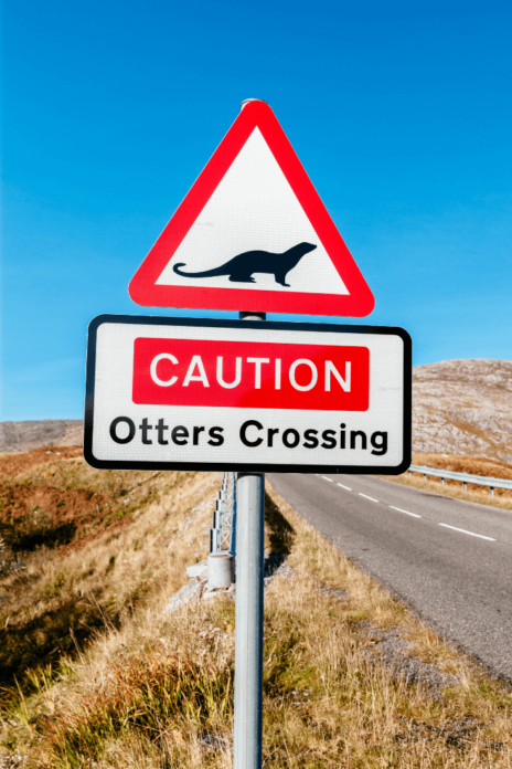 Otters Crossing, Outer Hebrides, Scotland