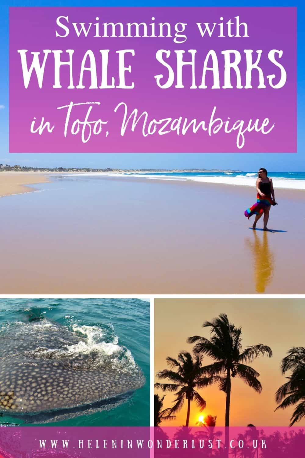 Swimming with Whale Sharks in Tofo Mozambique