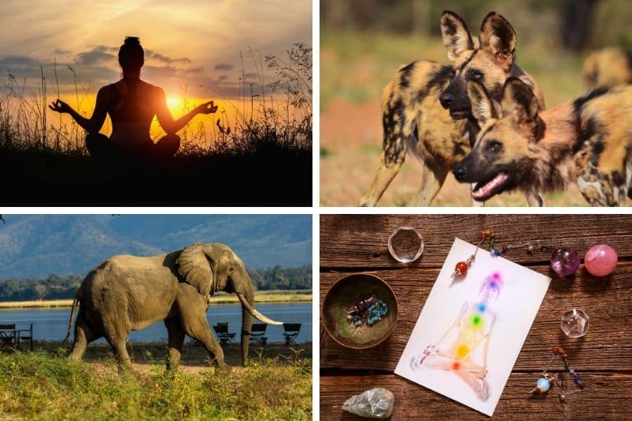 Yoga Safari Zambia & Zimbabwe Group Tour