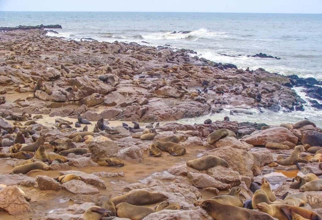 Cape Cross Seal Colony - Namibia