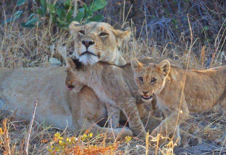 Chobe National Park - Botswana