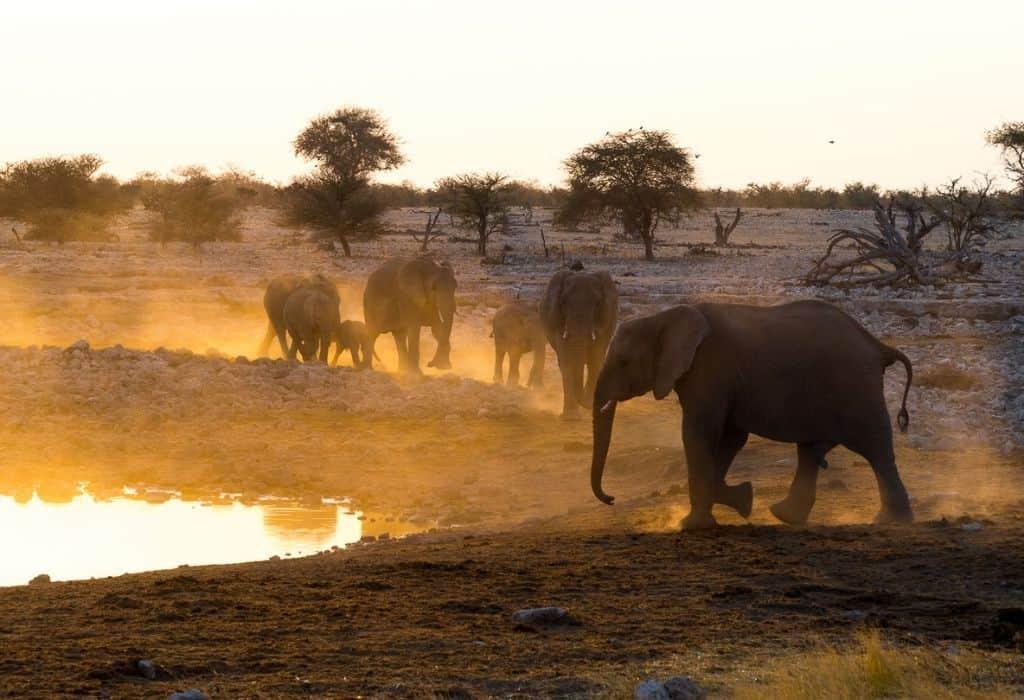 Elephants at the Okaukuejo Waterhole in Etosha National Park in Namibia