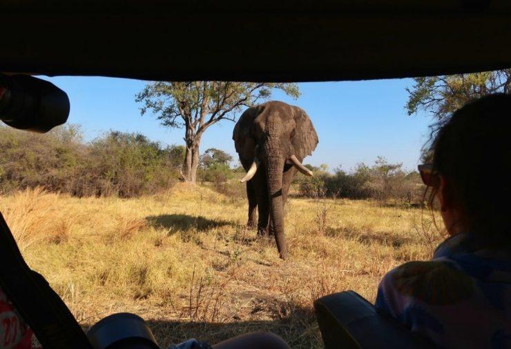 Elephant in Khwai Concession - Botswana