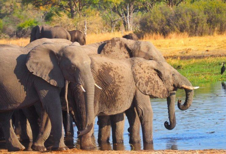 Elephants in Khwai Concession - Botswana