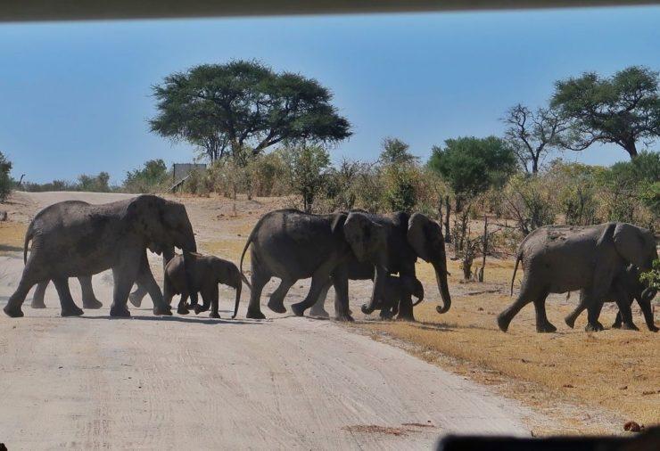 Khwai Concession - Botswana