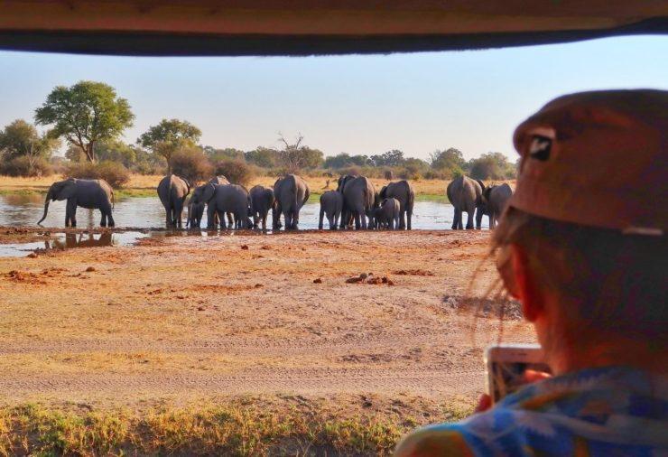 Elephants in Moremi Game Reserve Botswana